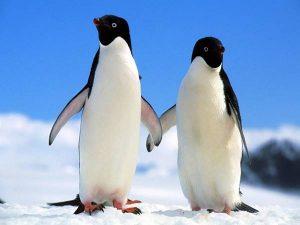 Mơ thấy chim cánh cụt là điềm lành hay dữ?