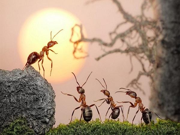 Nằm mơ thấy kiến là điềm báo gì, đánh con gì?