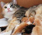 Nằm Mơ Thấy Mèo Đẻ Đánh Con Gì | Giải Mã Giấc Mơ Mèo Đẻ Là Điềm Gì?